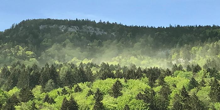 Pollensturm bei Lofer; Quelle: Christian König