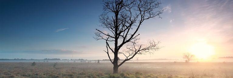 Heute regional Nebel - Aber sonst oft strahlend sonnig