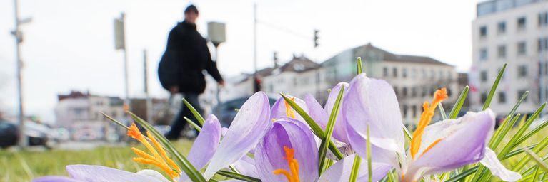Frühlingshauch am Wochenende
