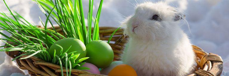 Ostern zwischen Frühsommer und Spätwinter?!