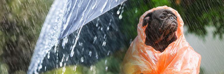 Regenwetter zum Donnerstag