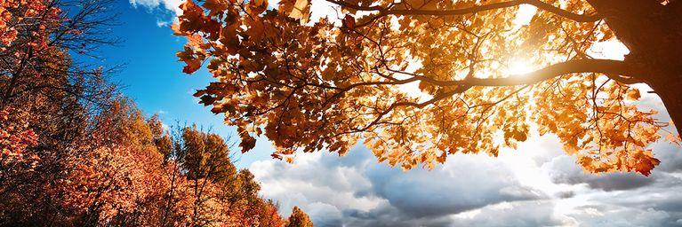 Zwischen Herbst und Altweibersommer