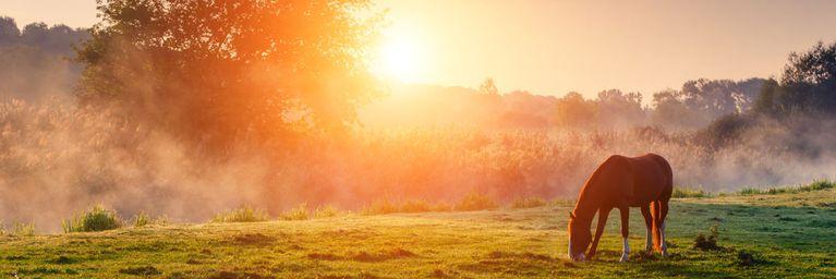 Zwischen Sonnenschein und Nebel-Misere