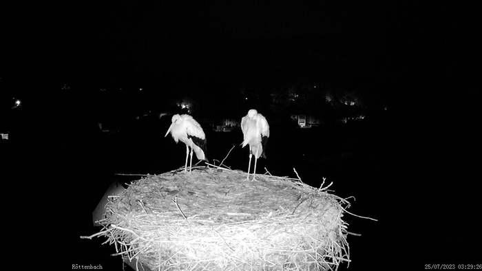 HD Live Webcam Röttenbach (bei Erlangen) - StorchenCam