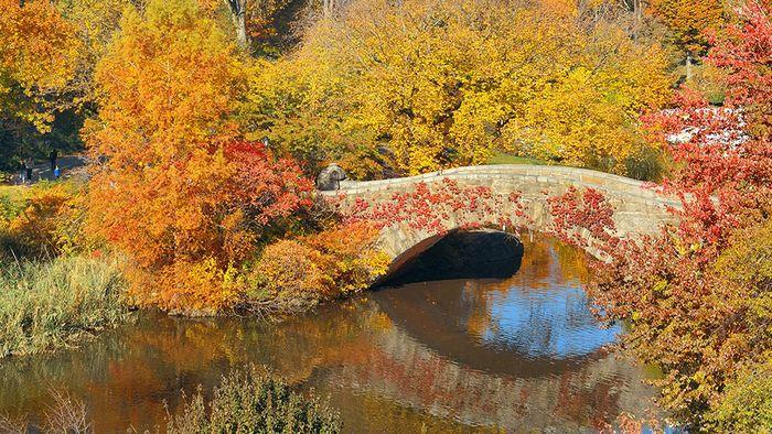 Darum verfärbt sich das Laub im Herbst