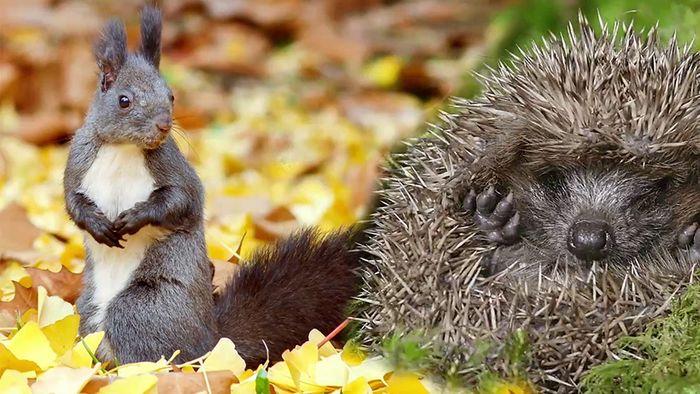 Du kannst Tieren im Herbst bei ihrer Futtersuche helfen.