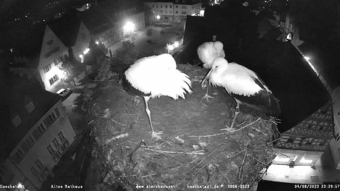 HD Live Webcam Höchstadt a.d. Aisch - Storchennest