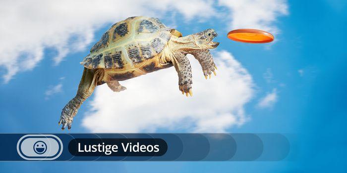 Lustige Videos Unterhaltung Fun Und Virals Wettercom