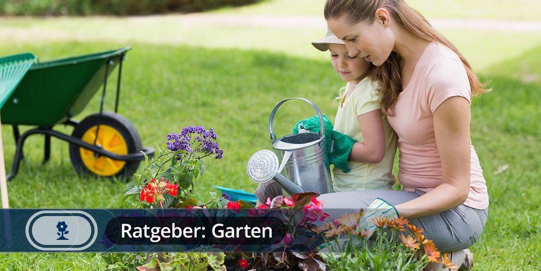 Ratgeber Garten ratgeber pflanzen garten und saisonale gartentipps wetter com