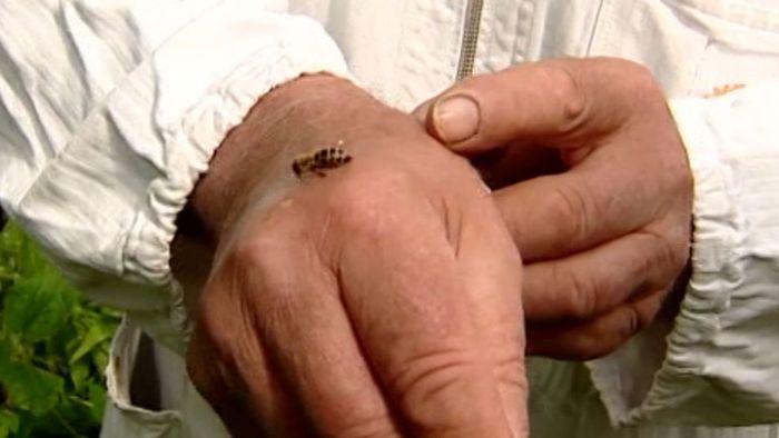 Sommerplage: Das hilft gegen Bienen und Mücken!