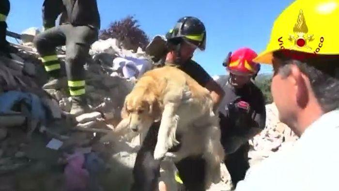 Hund zehn Tage nach dem Erdbeben in Italien gerettet