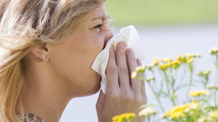 Pollenflugkalender - Was fliegt wann?