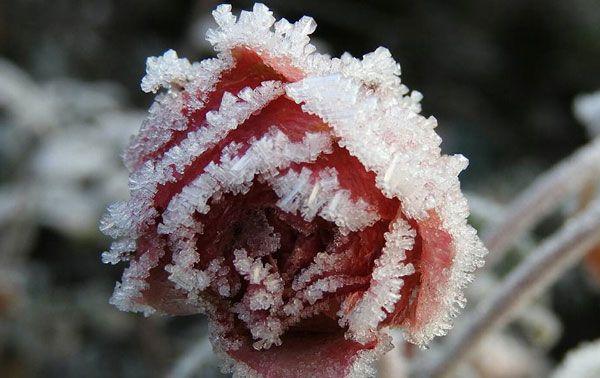 Eisig schöne Winterwelt