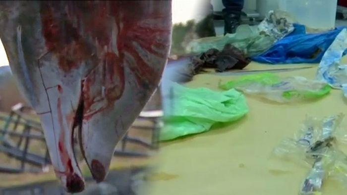 Grausam: Unmengen Meeres-Plastik töten Wal