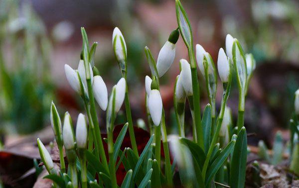 Die ersten Frühlings-Vorboten