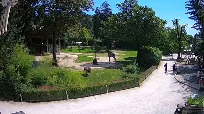 HD Live Webcam Zoo Ljubljana - Giraffes