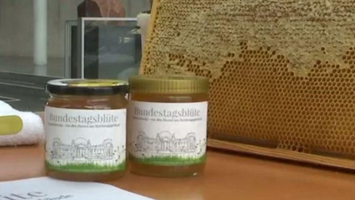 Bienen in Gefahr: Bundestagshonig als mahnendes Projekt