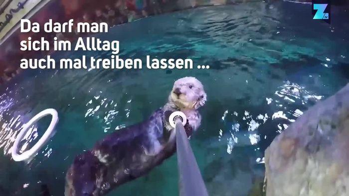 Kamerageil! Otter spielt mit Selfie-Stick