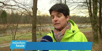 Lichte Momente in München: 300 Bäume fallen in den Isarauen!