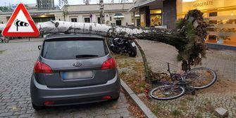 Vorsicht! Orkangefahr! Bäume können umfallen!