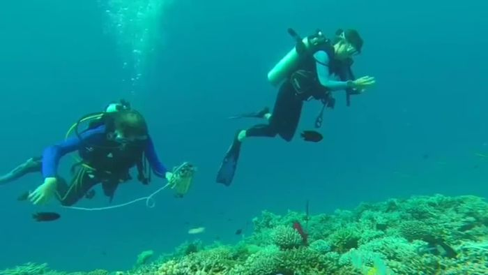 Klimawandel: Korallenriffe sterben immer schneller
