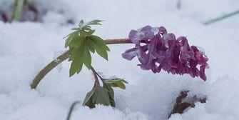 16-Tage-Trend: Frühling hat überhaupt keine Chance