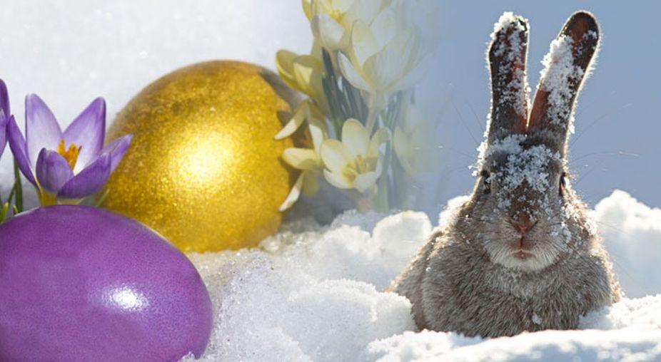 Ostertrend 2018 weihnachten im klee ostern im schnee for Lustige bilder zu ostern