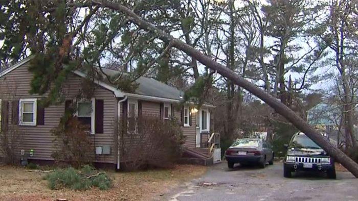 Baum umgestürzt: Geparktes Auto rettet Haus