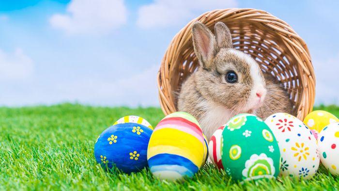 Großzügig Ostern Aktivitäten Für 3. Sortierer Galerie - Gemischte ...