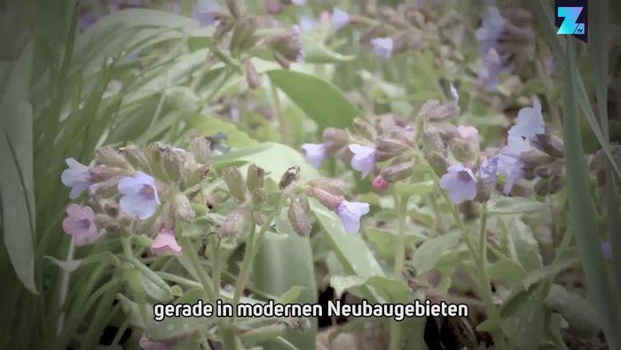 Insektensterben adé: So einfach wird man Bienenfreund