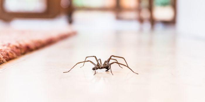 in jedem haushalt zu finden so h ltst du m cken spinnen andere insekten fern. Black Bedroom Furniture Sets. Home Design Ideas