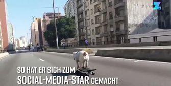 Tierischer Sportler: Hund 'skatet' Gassi