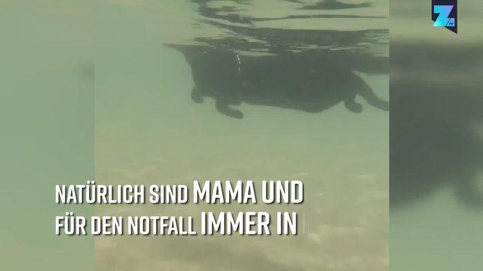 Kein gewöhnlicher Stubentiger: Diese Katze liebt Wasser
