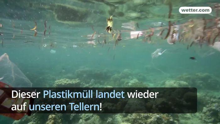 Plastikmüll in Ozeanen ein immer größer werdendes Problem