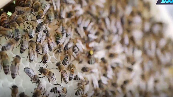 Insektenschutz: Bienenstock für den Balkon erfunden