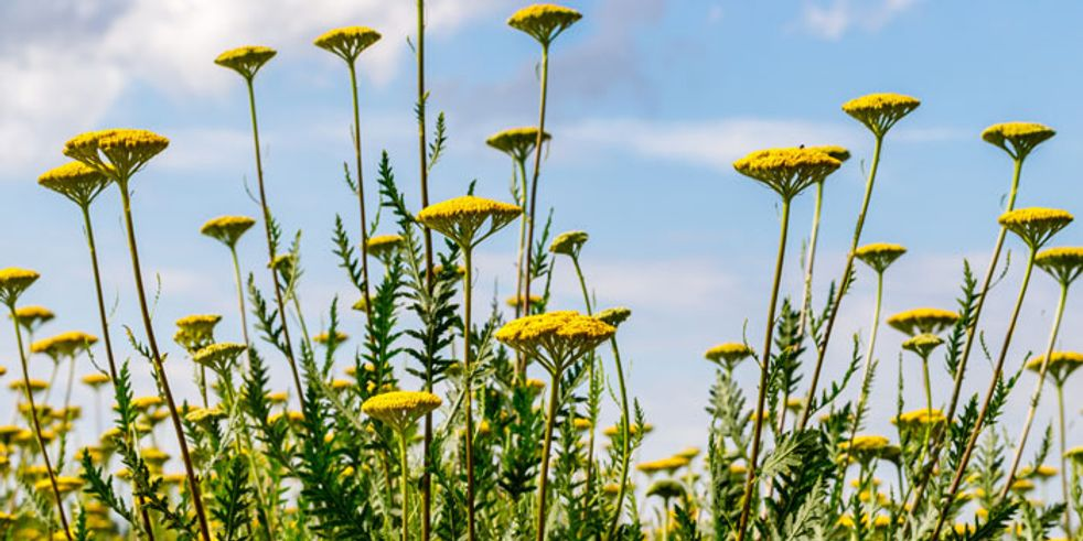 Bunter Garten Trotz Hitze Diese Pflanzen Trotzen Der Trockenheit