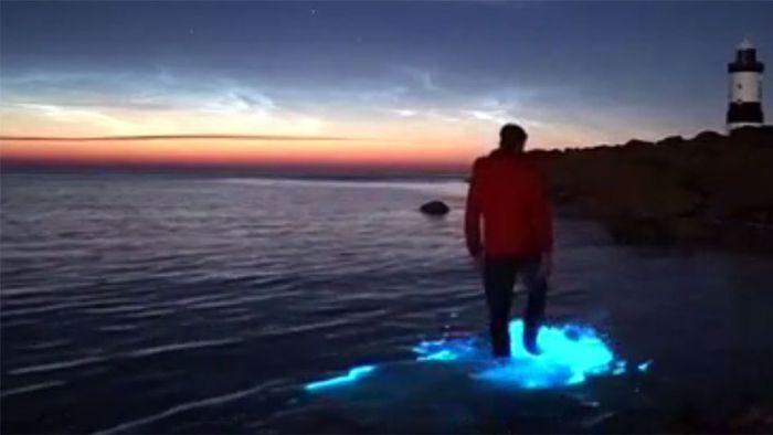 Hammer Bilder von blauem Meeresglühen