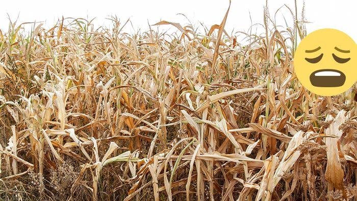 NOAA-Langfristprognose: Trübe Aussichten für Dürre-Geplagte