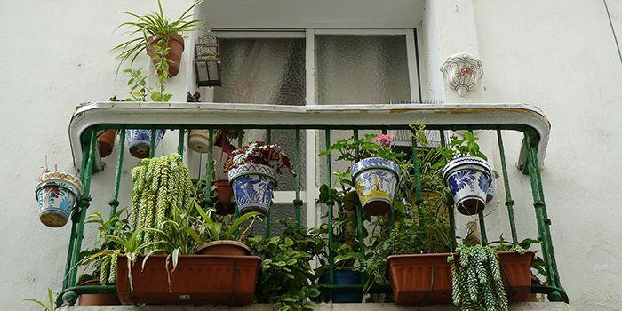Winterharte Balkonpflanzen Diese Pflanzenüberleben draußen wetter com ~ 20021641_Winterharte Sukkulenten Für Draußen