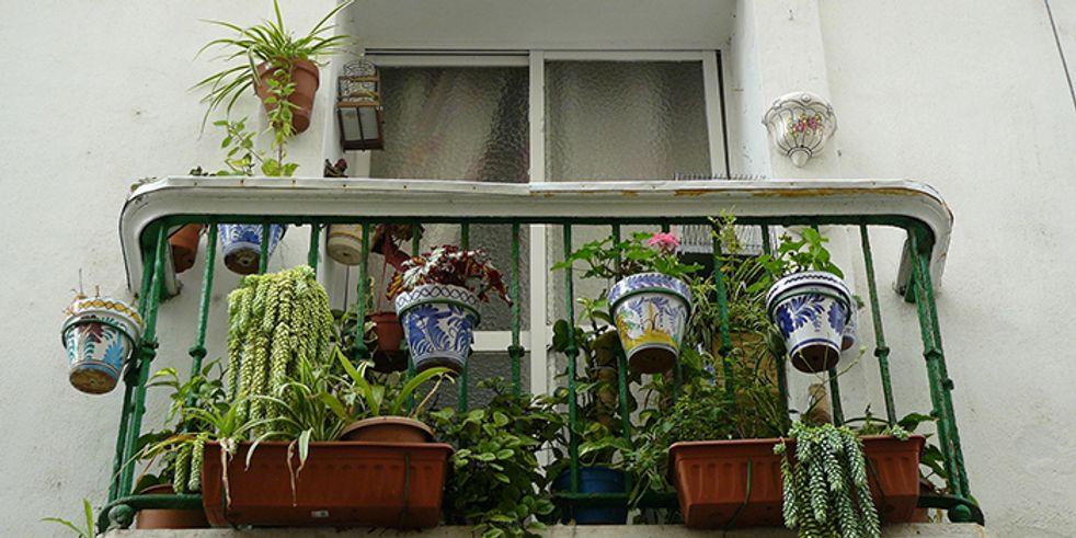Winterharte Balkonpflanzen Diese Pflanzen Uberleben Draussen