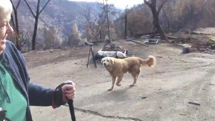 Trotz Waldbränden: Treuer Hund bewacht wochenlang Grundstück