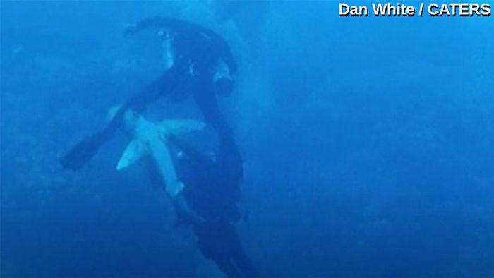 Lebensgefahr! Hai beißt Taucher ins Bein