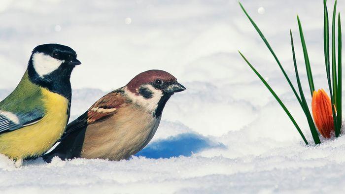 März-Prognose: Herber Wintereinbruch um Monatsmitte