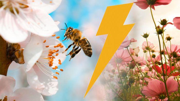"""Kais Meinung: """"Blitzfrühling"""" nicht von Nachhaltigkeit"""