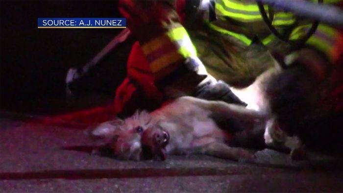 Heldenhaft! Feuerwehr belebt Hund wieder