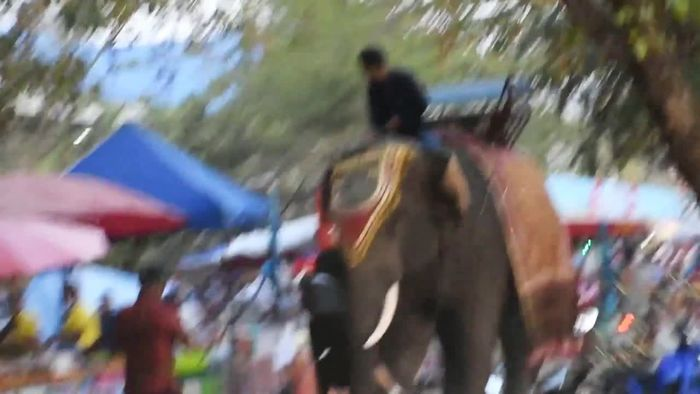Bange Sekunden: Wild gewordener Elefant packt Teenager