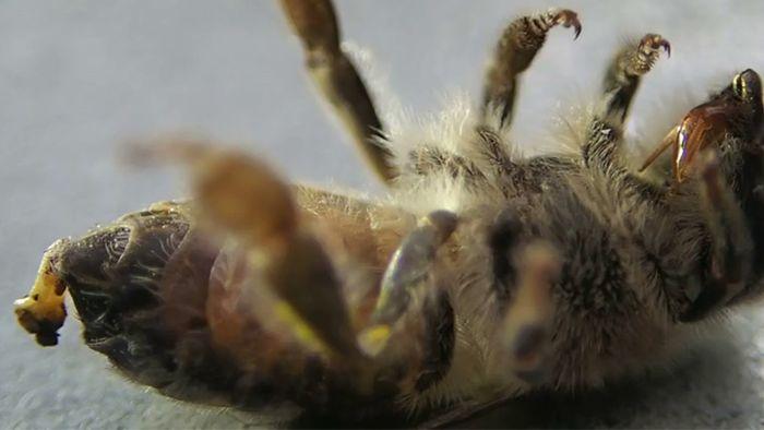 Insekten sind für unser Ökosystem enorm wichtig.