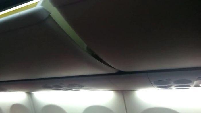 Schock im Flugzeug: Giftiger Skorpion in Gepäckablage entdeckt