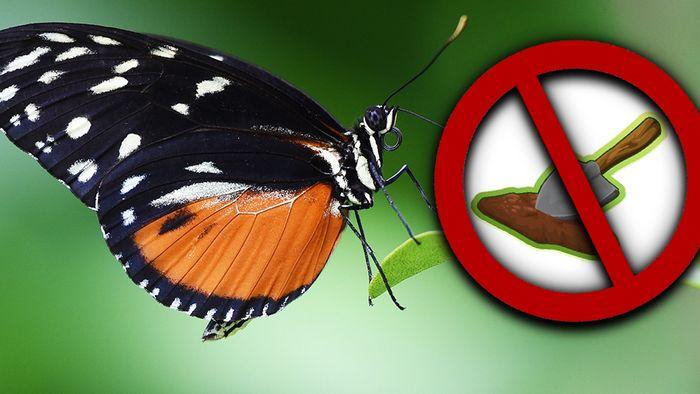 Trotz schönem Wetter solltest Du Deinen Garten den Schmetterlingen zuliebe nicht zu früh aufräumen.