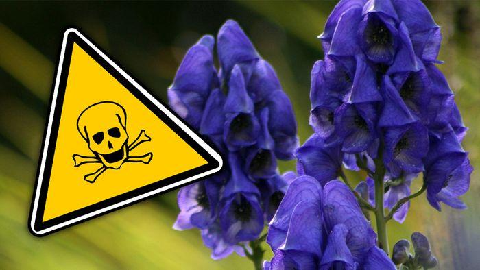 Viele Pflanzen in unserem Garten sind giftig.